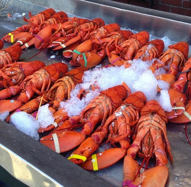 Lobster attack! lol